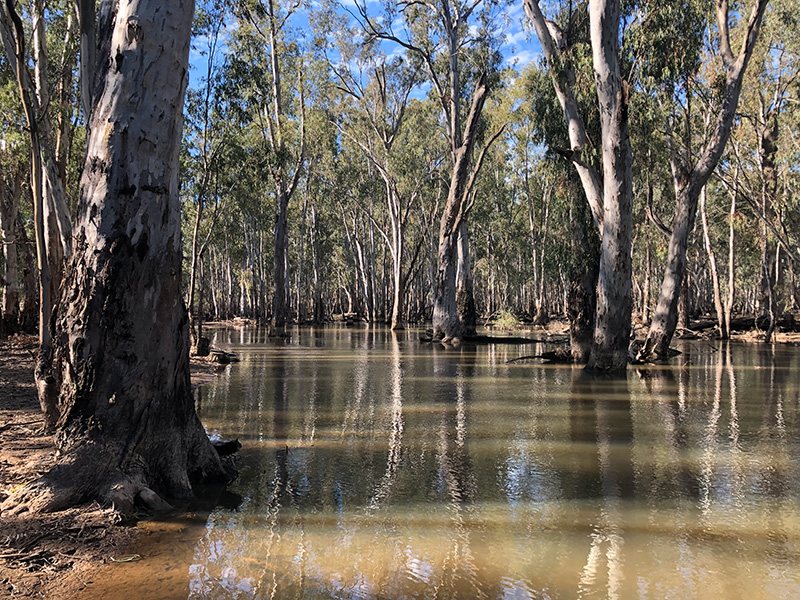 Basin states set to align with NSW on water compliance